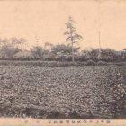 18809